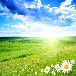 Aofoto 10X10FT Spring Meadow Photography Backdrop Nature Scenic Photo Studio Background Sunlight Blue Sky Grassland Flower Kid Baby Adult Lover Artist