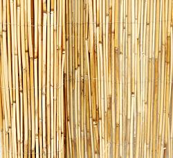 Backyard X-scapes Peeled Reed Fencing 6FT H X 16FT L