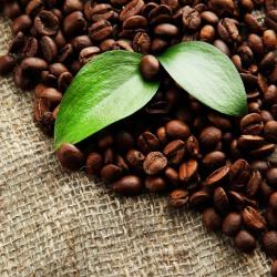 Uber Coffee Beans - Organic 1KG