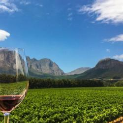 Winelands Celebration Experience - Wine & Chocolate Pairing