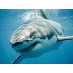 Xtreme Shark Volunteer Expedition Hermanus