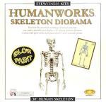 Skullduggery Eyewitness Kits Humanworks Skeleton Diorama