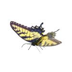 Metal Earth Tiger Swallowtail Butterfly